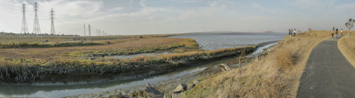photo of the marshland